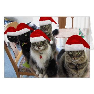 La salutation de Joyeux Noël de bande Carte De Vœux
