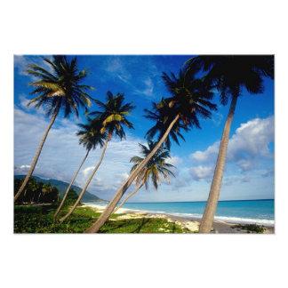 La Samana Peninsula, Dominican Republic, 2 Photo