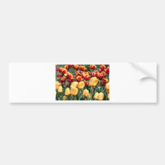 La tulipe jaune et rouge fleurit en fleur 5 autocollant de voiture