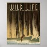 La vie sauvage les parcs nationaux préservent tout posters