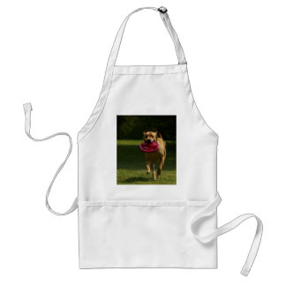 Lab Playing Frisbee Standard Apron