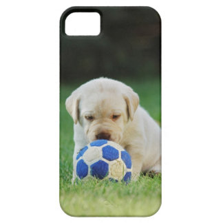 Lab soccer player iPhone 5 covers