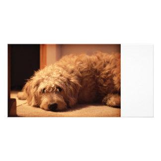 Labradoodle Dog looking sad Custom Photo Card