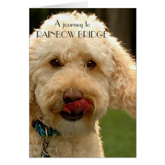 Labradoodle, Dog sympathy - Rainbow Bridge Card