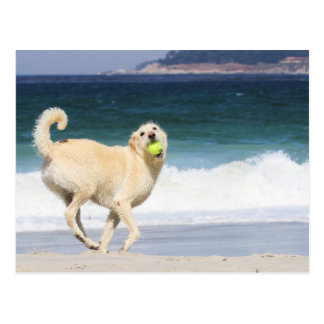 Labradoodle - Happy Day on the Beach Postcard