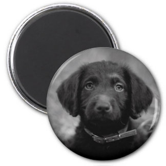 Labradoodle in B&W Badge Magnet