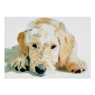Labradoodle Pup Print