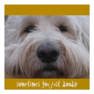 Labradoodle Thoughts Poster