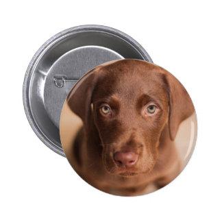labrador 2 inch round button