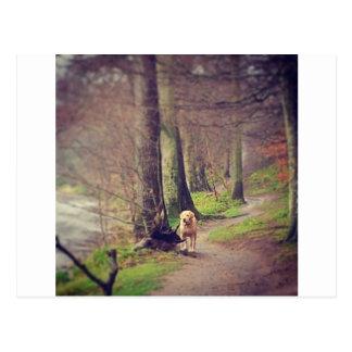 Labrador and his Regal Pose Postcard