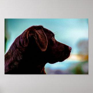 Labrador At Dusk Poster