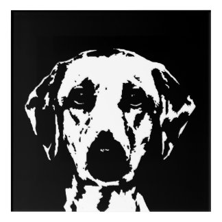 Labrador Black & White Acrylic Wall Art