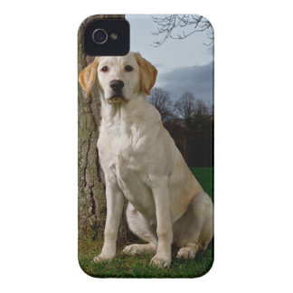 Labrador Blackberry Bold Case