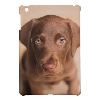 labrador case for the iPad mini