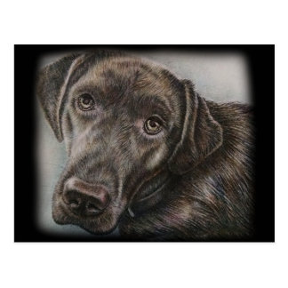 Labrador Dog Drawing of Animal Art Postcard