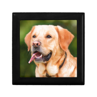 Labrador Dog Gift Box