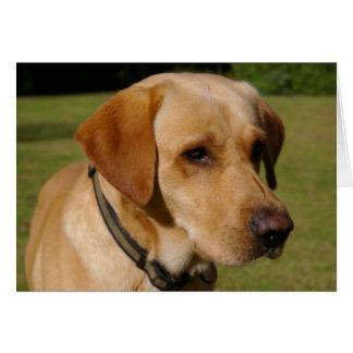Labrador d'or carte de vœux