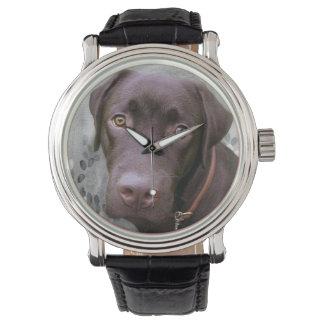 Labrador Jimmy -. - Watch