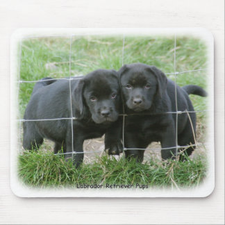 Labrador pups 9Y249D-159 Mouse Pad