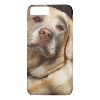 Labrador Retriever 2 iPhone 7 Plus Case