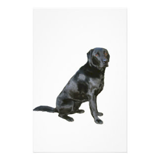 Labrador Retriever - Black 2 Stationery