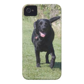 Labrador Retriever black dog beautiful photo, gift iPhone 4 Cases