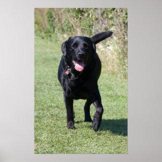 Labrador Retriever black dog beautiful photo print
