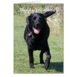 Labrador Retriever black dog happy birthday card