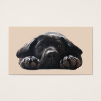 Labrador Retriever Breeder Business Card