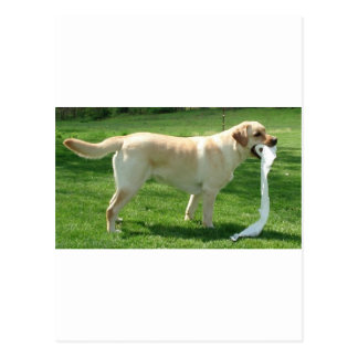 Labrador retriever cleaning up postcard