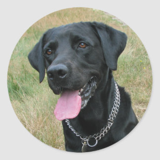 Labrador Retriever dog black stickers, gift idea Classic Round Sticker