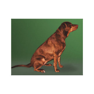 Labrador Retriever Dog Canvas Print