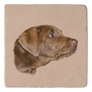 Labrador Retriever Dog,  Customizable Trivet