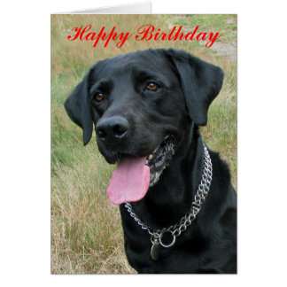 Labrador Retriever dog happy birthday card