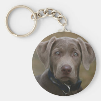 Labrador Retriever In Rare Light Silver Keychain