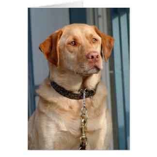 Labrador Retriever Love Card