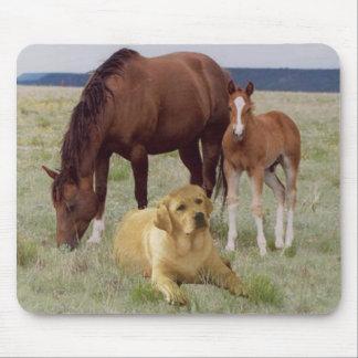 Labrador Retriever Mousepad Horses