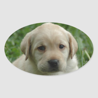 Labrador Retriever Oval Sticker