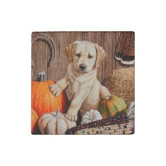 Labrador Retriever Puppy and Pumpkins Stone Magnets