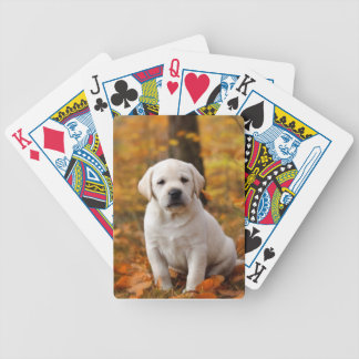 Labrador retriever puppy bicycle playing cards