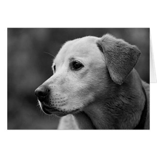 Labrador Retriever Puppy Blank Note Card