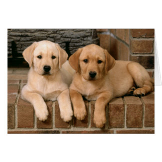 Labrador Retriever Puppy Dogs Note Card