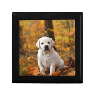 Labrador retriever puppy gift box