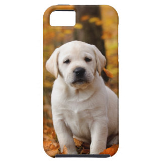 Labrador retriever puppy iPhone 5 cases