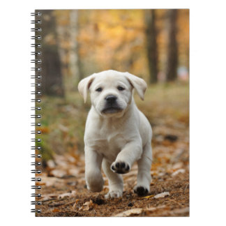 Labrador retriever puppy notebooks