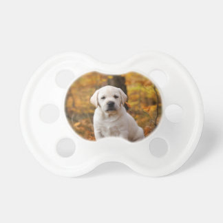 Labrador retriever puppy pacifier