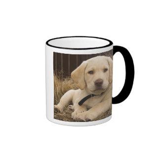 Labrador Retriever puppy Ringer Coffee Mug
