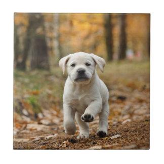 Labrador retriever puppy tile