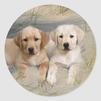 Labrador Retriever Sticker Pups On Beach