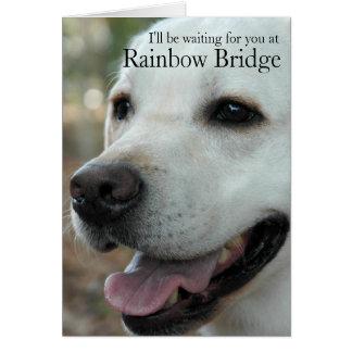 Labrador Retriever sympathy card2 Card